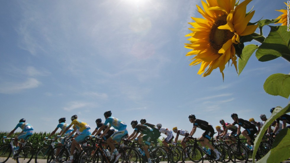 "JULY 18 - CHAMROUSSE, FRANCE: The pack riding with Italy's <a href=""http://cnn.com/2014/07/06/sport/cycling-cavendish-tour-de-france/"">Vincenzo Nibali</a>, wearing the overall leader's yellow jersey, pass a field of sunflowers during the thirteenth stage of the Tour de France cycling race over 197.5 kilometers (123 miles). The tour finishes in Paris on July 27."