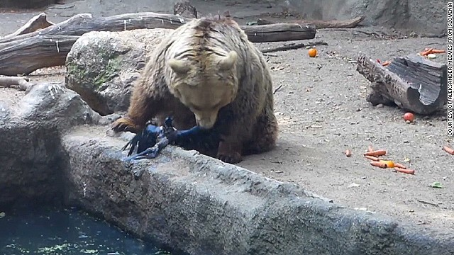 bear saves crow from drowning Budapest Zoo_00004325.jpg