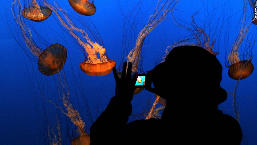 "TripAdvisor's top aquarium in the world, the Monterey Bay Aquarium features an array of exotic underwater creatures in its ""Jellies Experience"" attraction."