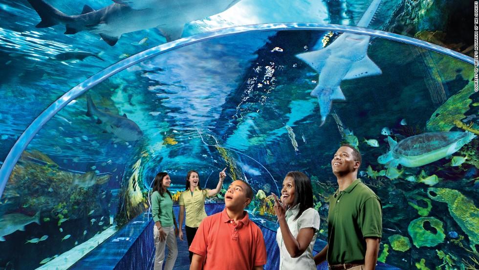 Fotos del acuario de georgia 7