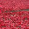London Ceramic Poppy10