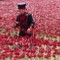 London Ceramic Poppy11