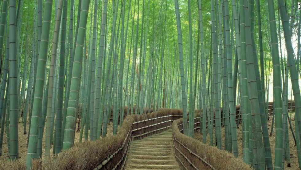 Sagano Bamboo Forest -- a most enchanting grove