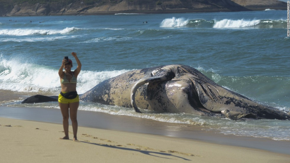 A woman takes a photo Monday, August 11, in front of a whale carcass that washed up on Macumba Beach in Rio de Janeiro.