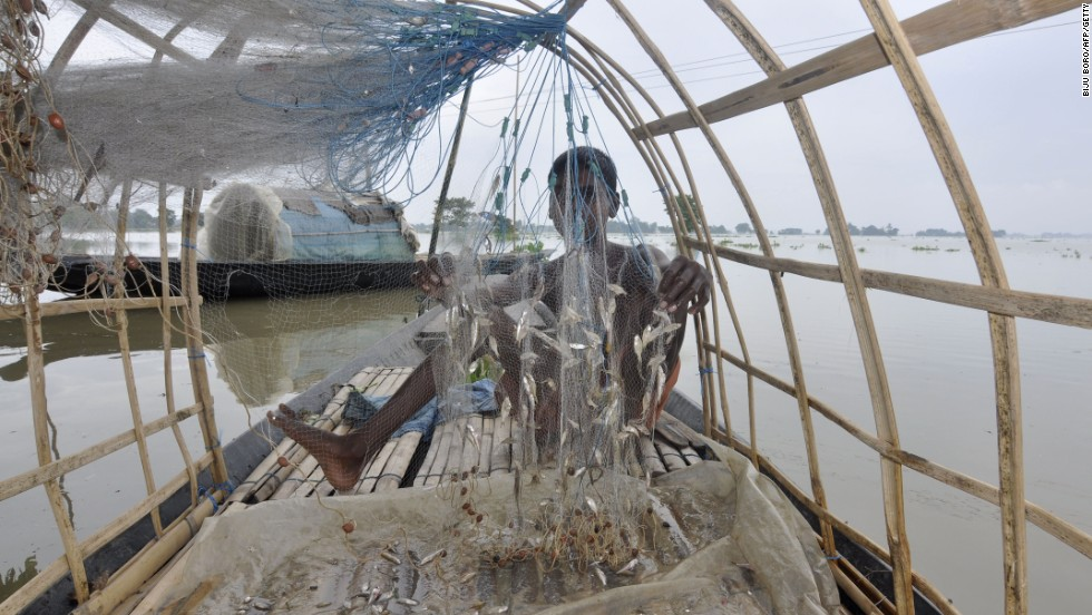 An Indian fisherman removes fish from his nets in the flood-affected village of Balimukh.