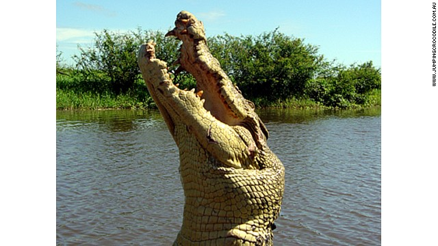 "Saltwater crocodile ""Michael Jackson"" on Australia's Adelaide River. Picture courtesy of Spectacular Jumping Crocodile Cruise."