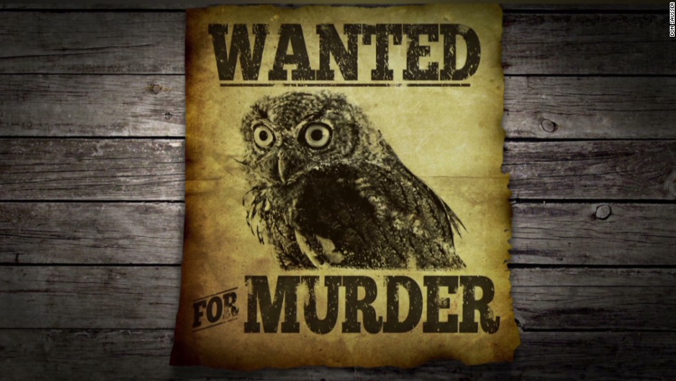 Wanted for murder: This owl - CNN Video