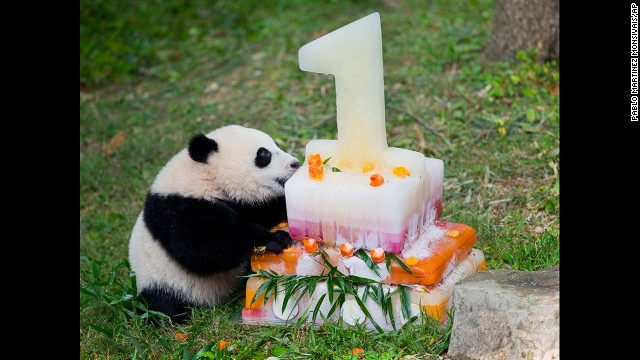 Giant panda cub Bao Bao celebrated her first birthday in style.