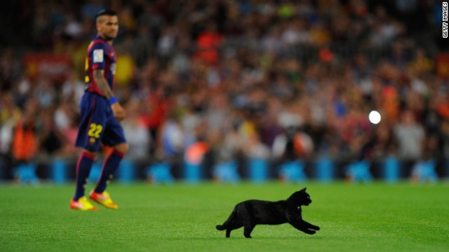 A black cat inavded the pitch before the Barca game, but brought no bad omesn as they won 3-0