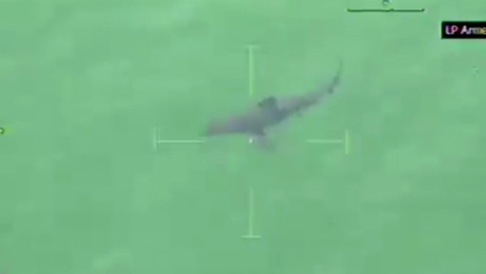 Massachusetts beach evacuated after great white shark spotted nearby