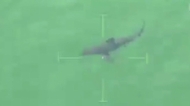 Great white shark spotted off beach