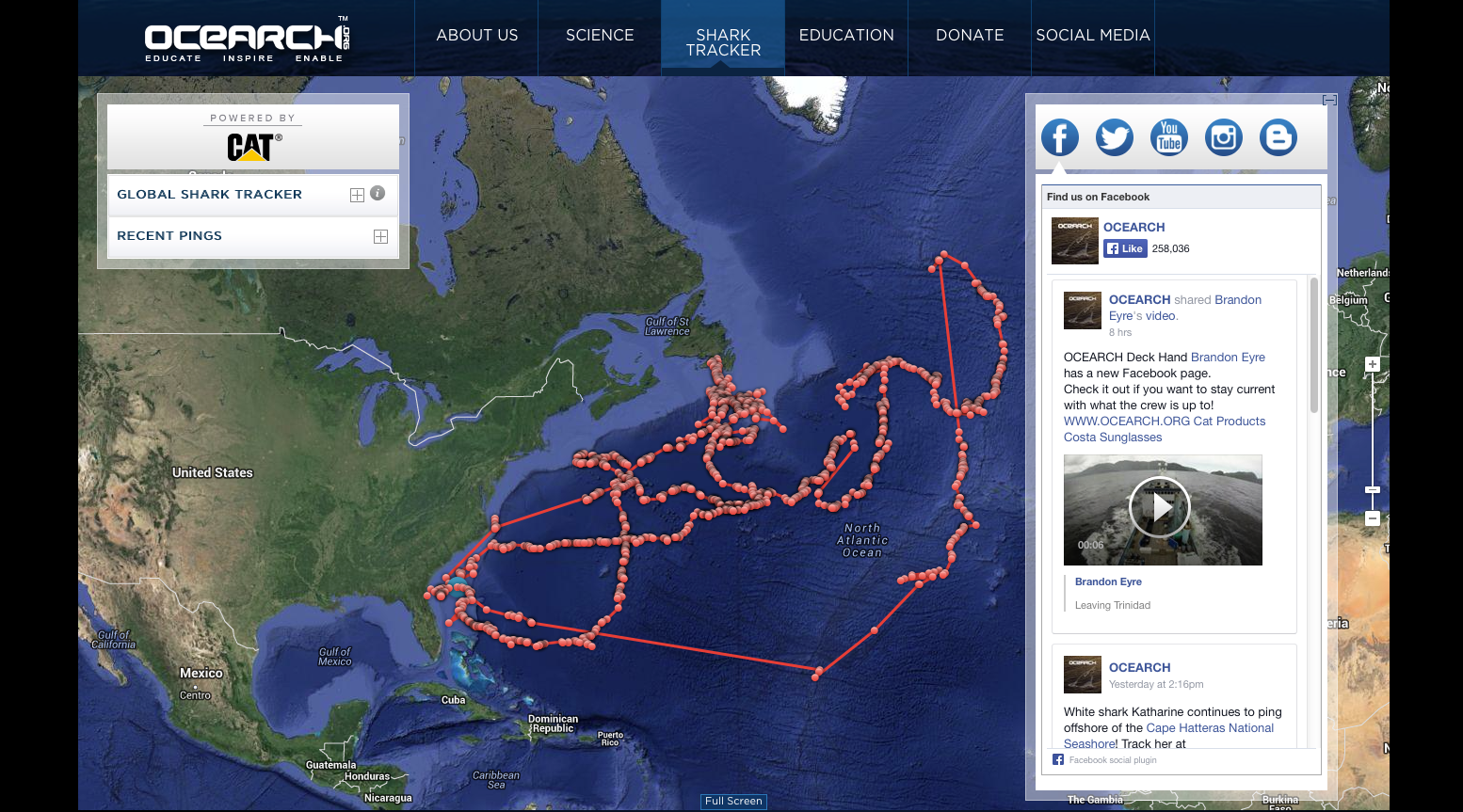 Great white sharks: You can track 'em   CNN Travel