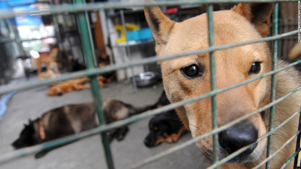 Chinese city kills 5,000 dogs to control rabies