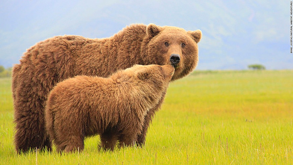 Natural Habitat Adventures specializes in wildlife photography tours, including trips to take pics of Alaskan grizzlies.