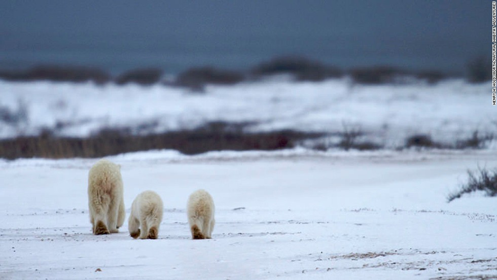 Natural Habitat Adventures claims it offers the world's best polar bear viewing/photographing tour. The company holds exclusive permits to tour the entire Churchill Wildlife Management Area in Manitoba, Canada.