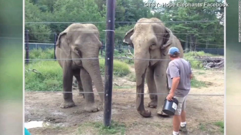 Elephant apparently crushes caretaker to death in Maine