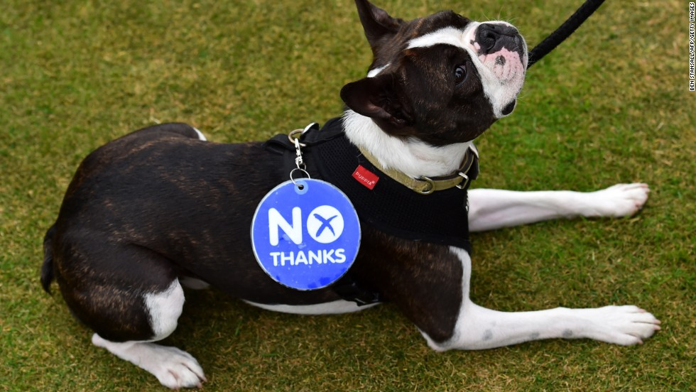 "A dog wears a ""no thanks"" badge during a pro-union rally in Edinburgh on September 14."