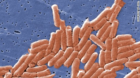 Salmonella 101 What you need to know