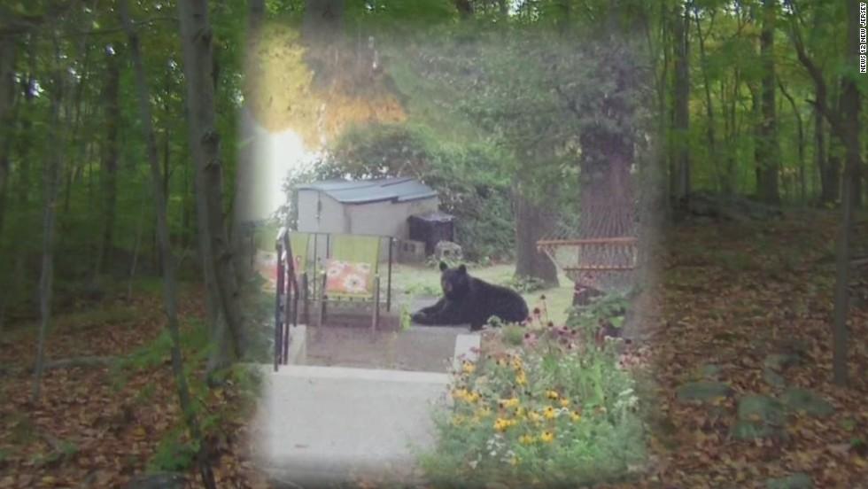Bear kills Rutgers student on hike - CNN Video