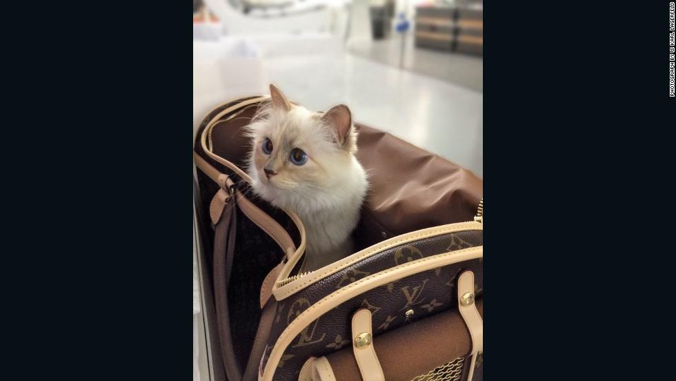 Karl Lagerfeld's cat, Choupette, is probably the most famous kitten with a penchant for private jets. She joins a host of other pets that favor the high life.