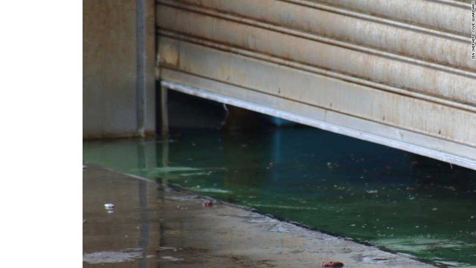 The remains of the dolphin pod can be seen on the floor of a Taiji butcher house, according to Sea Shepherd.