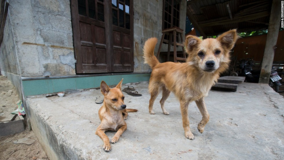 At least one pooch perks up for visitors in Hue.