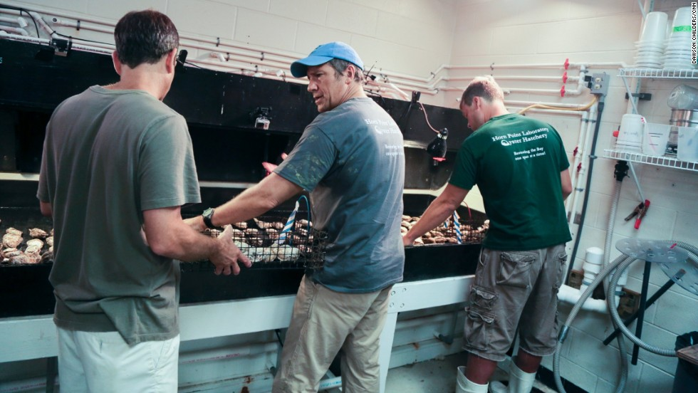 "Employees teach Mike Rowe about the ""oyster orgy."""
