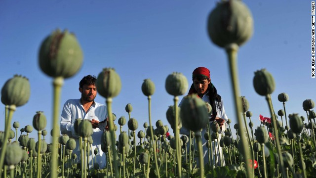 File photo: Afghan farmers work in their poppy field in Khogyani District of Nangarhar province in April, 2013.