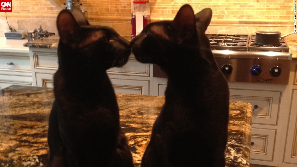 """I used to think that black cats were bad luck if they walked across your path,"" says Elaine Lombardo. But when her husband showed her photos of black Savannah breed cats -- which have very subtle spots -- ""it changed my ideas about black cats totally!"" They now have this pair, <a href=""http://ireport.cnn.com/docs/DOC-1181852"">Dutchy and Gotham</a>."