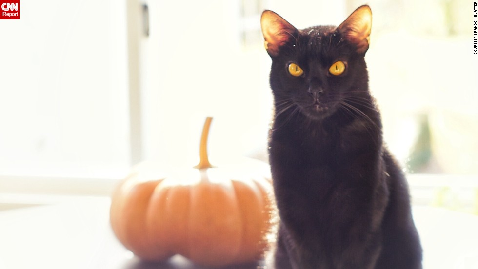 "<a href=""http://ireport.cnn.com/docs/DOC-1182012"">Salem</a> is ""the quintessential black cat,"" with fur ""softer than silk"" and ""unbelievably expressive"" yellow eyes, says Brandon Blatter. He suggests experimenting with exposure when photographing a black pet. ""By overexposing the photo, more detail is brought out of their black fur,"" he says."