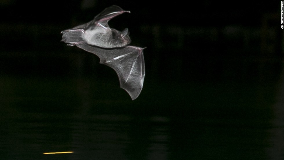 "<a href=""http://ireport.cnn.com/docs/DOC-1130449"">Jim Heston </a>takes nightly swims at a pool near Cambodia's Mekong River but he's rarely swimming alone. During the hot and dry months of March to May, the insects and bats know to head to the pool. Heston says he doesn't mind the company. ""Swimmers will do their laps while the bats feed,"" he said."