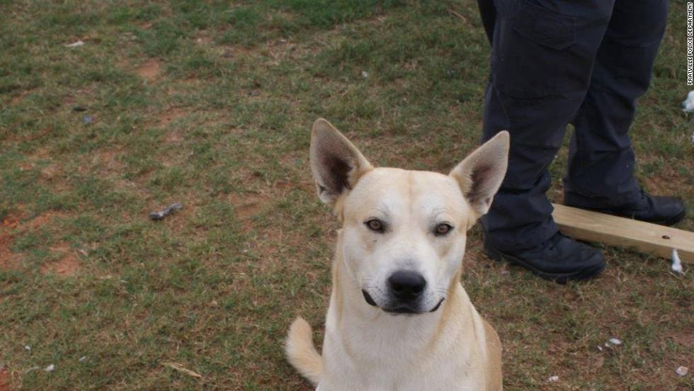 Alabama dog gets owner caught for alleged drug offenses