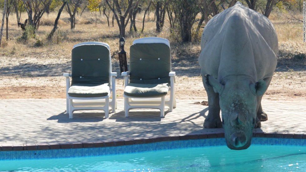 "A <a href=""http://ireport.cnn.com/docs/DOC-1112151"">rhino takes a drink </a>from a pool at <a href=""http://www.khamarhinosanctuary.org.bw/"" target=""_blank"">Khama Rhino Sanctuary</a> in Serowe, Botswana. The sanctuary's wildlife project aims to save rhinoceroses."