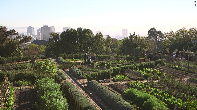 Urban farming is on the rise in Cape Town, South Africa