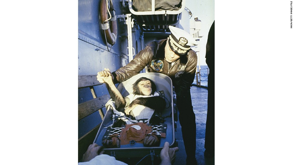 NASA's celebrity animal astronaut, Ham the Chimpanzee is greeted after landing at sea, after a flight into space in 1961.