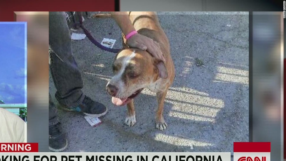 Dog booked on Delta flight goes missing