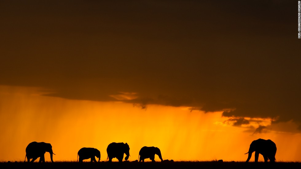 "For director Kief Davidson, it is imperative that the Chinese educate themselves about where ivory really comes from. He hopes ""The Ivory Game"" will have a massive and immediate impact. Pictured : elephants in Mara North Conservancy, July 2014."