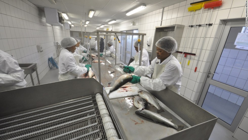 Workers at the Highlands Trout plant in Lesotho gut the fish in preparation for export.
