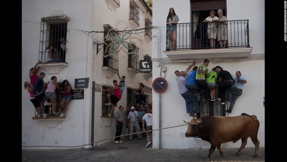 <strong>July 21:</strong> People climb onto window ledges to try to avoid a bull during the Toro de Cuerda festival in Grazalema, Spain. During the festival, a long rope restrains the bull as it runs through the village's streets.