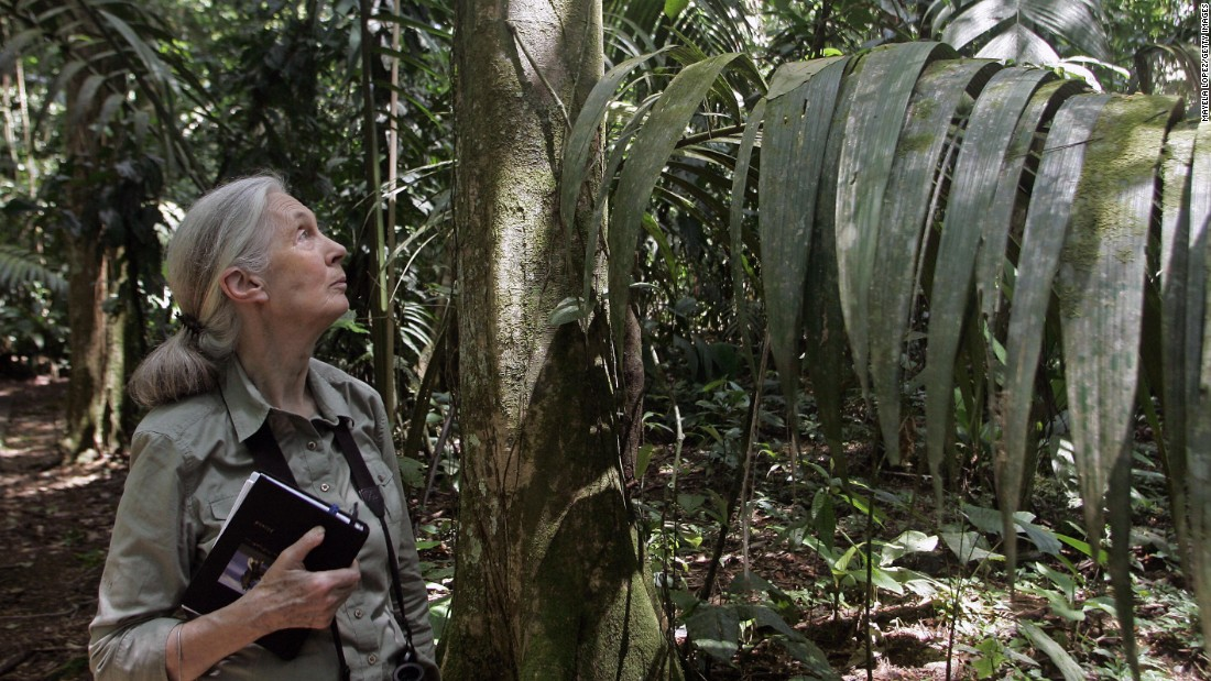 "British primatologist Dame Jane Goodall, 81, is best known for her long-term research on wild chimpanzees in Tanzania. She founded, 的 <a href=""http://gombechimpanzees.org/"" 目标=""_空白&amp报价t;>Jane Goodall Institute Research Center</一个> in Gombe National Park, which is the world's longest running continuous wildlife research project. She also started Roots &安培; Shoots, the Institute's global environmental and humanitarian program for young people."