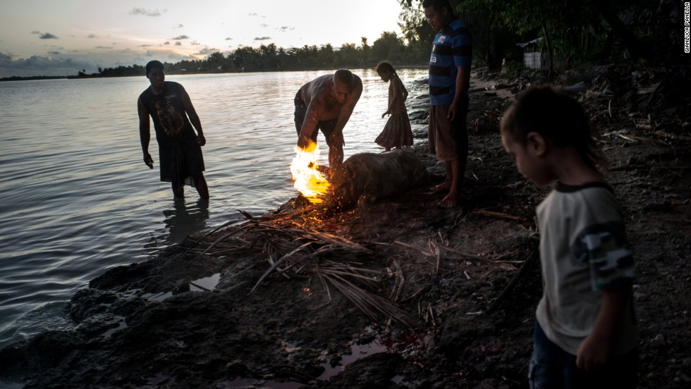 Residents butcher a pig in preparation for a feast. Pigs are commonly kept as pets by many of Kiribati's citizens.