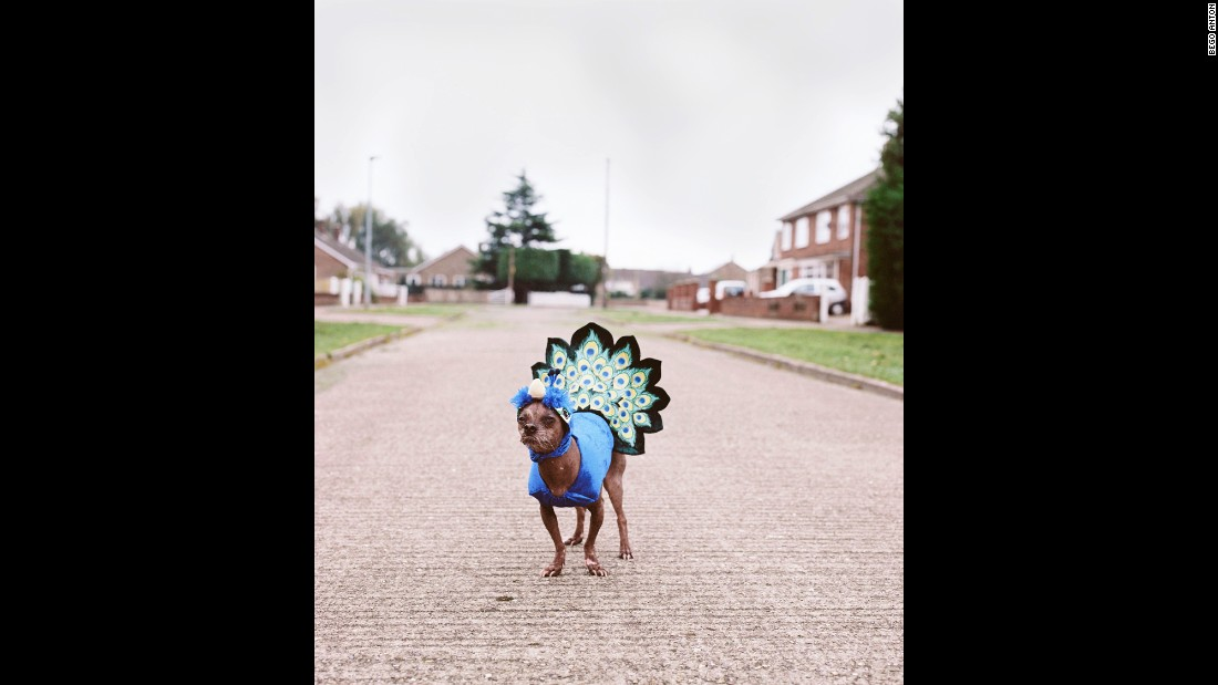 Mugly is often entered in fancy dress competitions. He has many different costumes, including this peacock outfit.