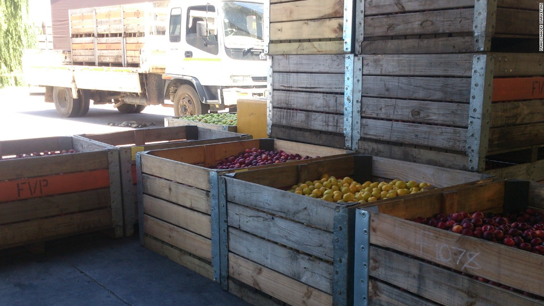 Plum farmers deliver their fruit at the Freshness First facility in Franschhoek for testing.