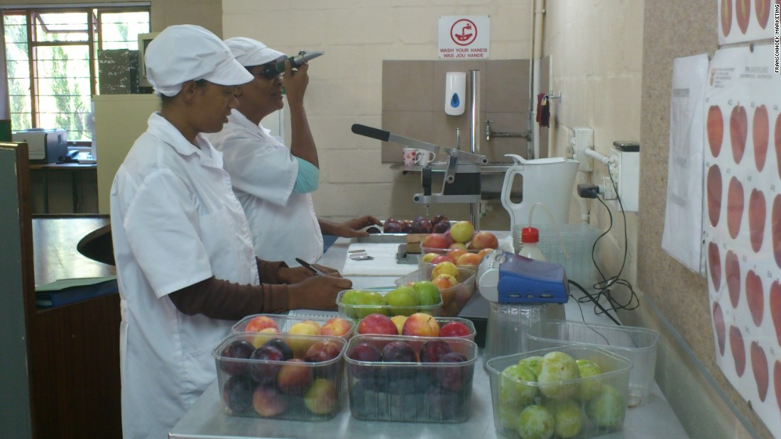 Samples of fruit processed at the facility are closely inspected and tested.