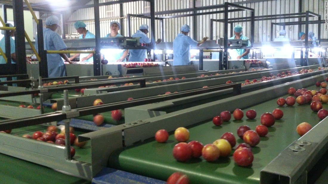 Plum shipments from South Africa are expected to increase by around 10% this year.