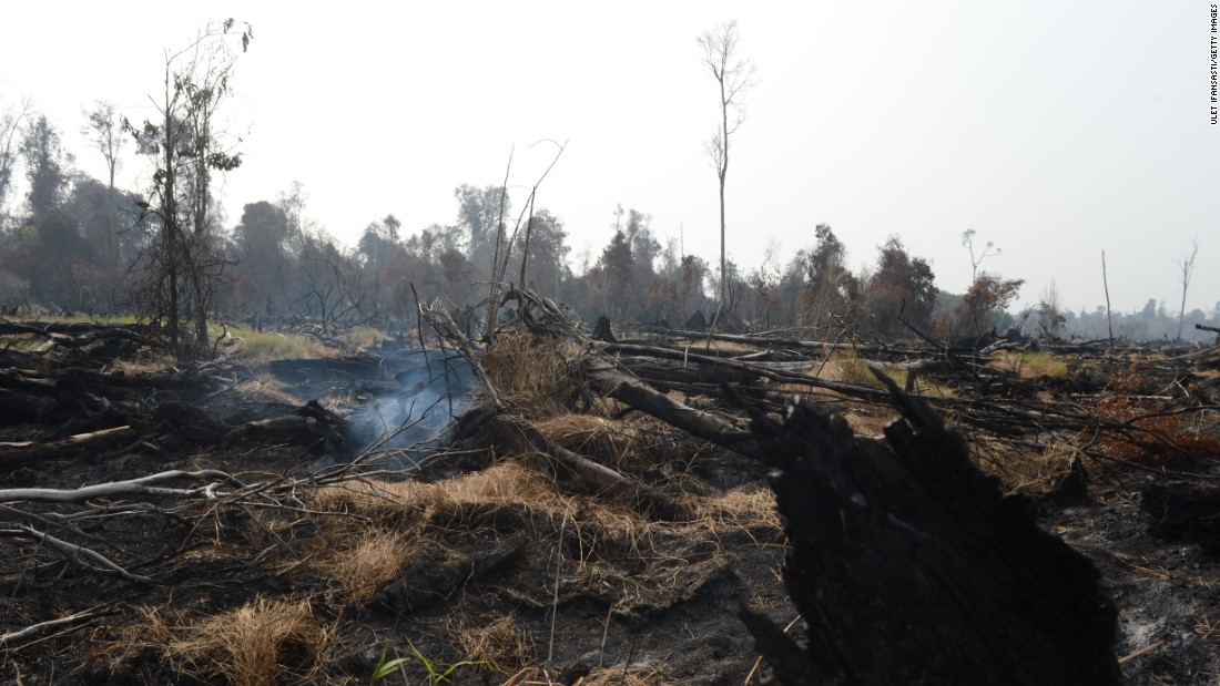 Burned trees and clearing in protected peatland in Riau province, June 29 2013. Environmentalists say that illegal slash and burn method is a widespread method of clearing land.