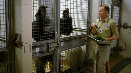 Morgan Spurlock learns to feed gorillas in an episode of Inside Man