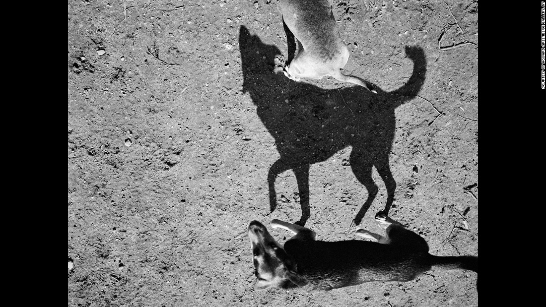 """There was something about the primal nature of the shadows of these little lovable pets of ours. ... They immediately struck me as something like cave drawings,"" Roma said.<br />"