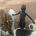 South Sudan stories Tutu boy grazing sheep