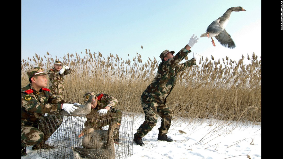 A paramilitary policeman releases a wild goose in Linghai, China, on Tuesday, January 20. About eight wild geese had been found injured, according to local media, and they were set free after being treated.